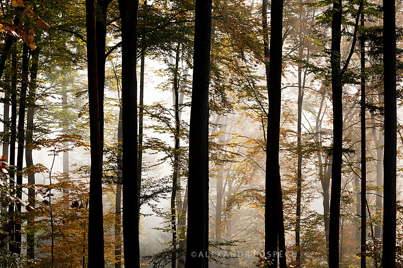 -White-Carpathians-Beech-forest